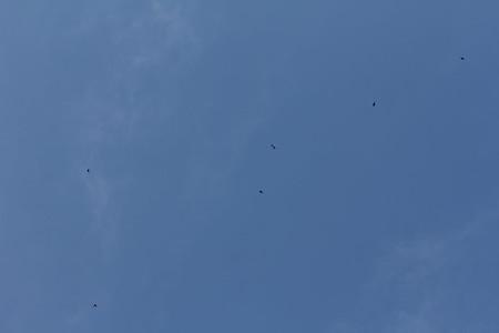 青空を飛ぶツバメ