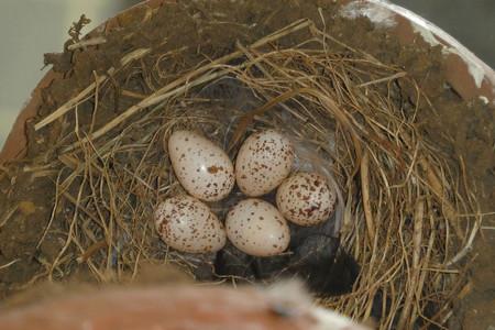 卵5個異常なし
