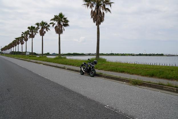 Photos: 千葉フォルニア