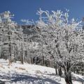 写真: 白い木立3