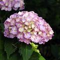 写真: 季節の花