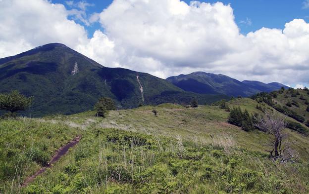 写真: 山の上の散歩道