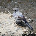 写真: 水辺の小鳥