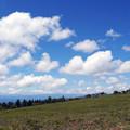 写真: 夏の高原