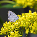 写真: 黄色い花と蝶