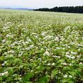 写真: 蕎麦の畑