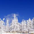 Photos: 白い林