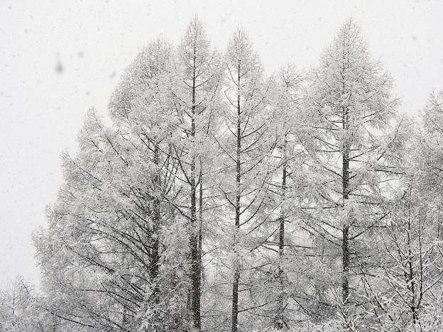 Photos: 雪化粧
