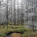 Photos: 霧氷