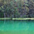 Photos: 緑の池