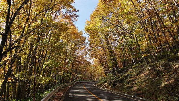 落葉樹の道