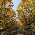 Photos: 落葉樹の道