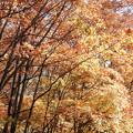 雑木林の秋