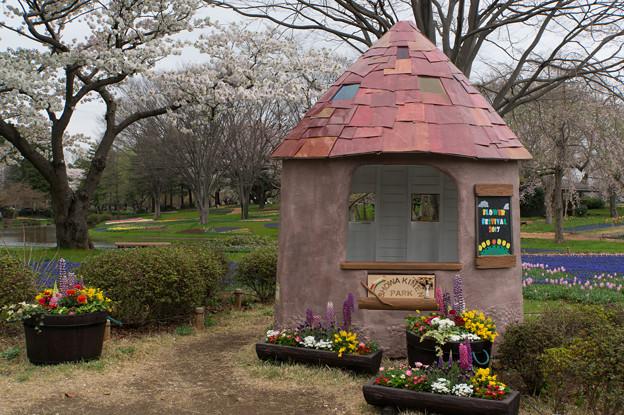 昭和記念公園【渓流広場の様子】1