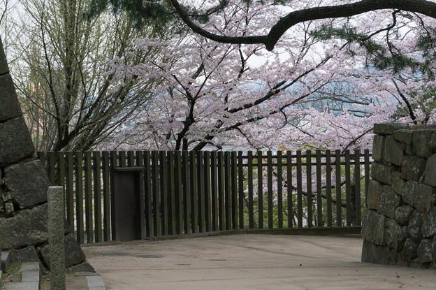 【福山城の桜】2