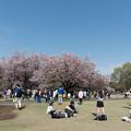 新宿御苑【後半の桜の眺め】