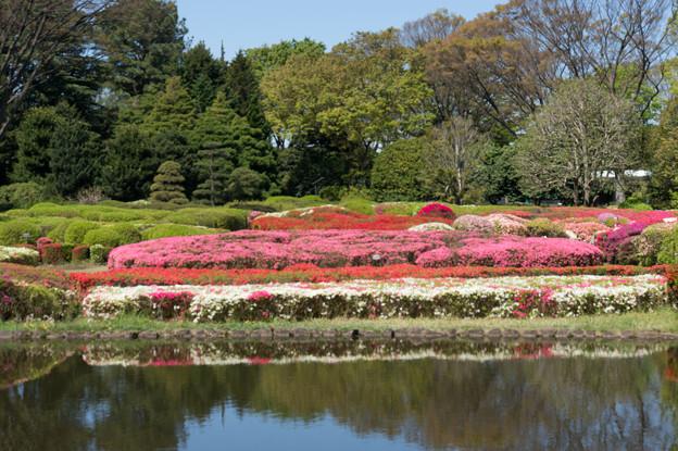 神代植物公園【つつじ園の眺め】2