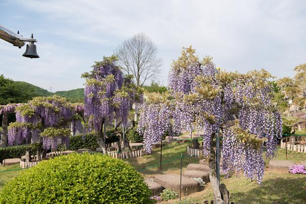 ふじの咲く丘【見本園の眺め】2