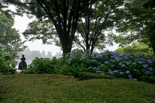 昭和記念公園【花木園あじさいロードの紫陽花】1