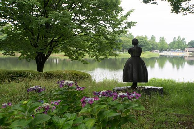 昭和記念公園【花木園あじさいロードの紫陽花】2