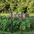 【中井蓮池の里の様子】1