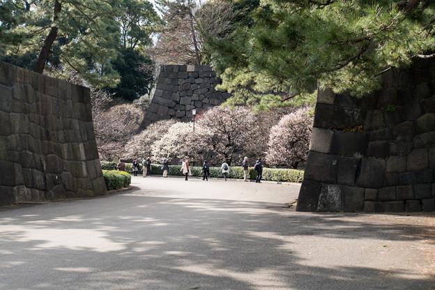 皇居東御苑【梅林坂の眺め】