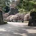 写真: 皇居東御苑【梅林坂の眺め】