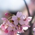 写真: 新宿御苑【陽光】5