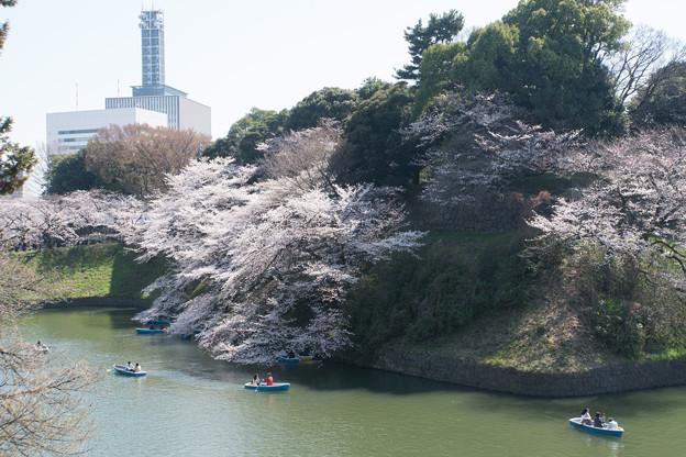 【千鳥ヶ淵の桜】3