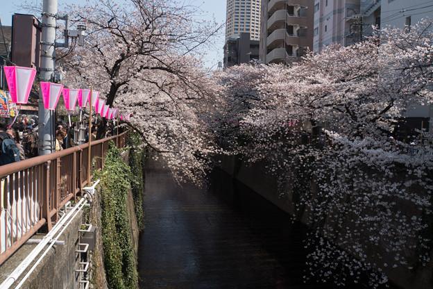 【目黒川の桜並木】3