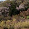 Photos: 【花桃の丘の眺め】2