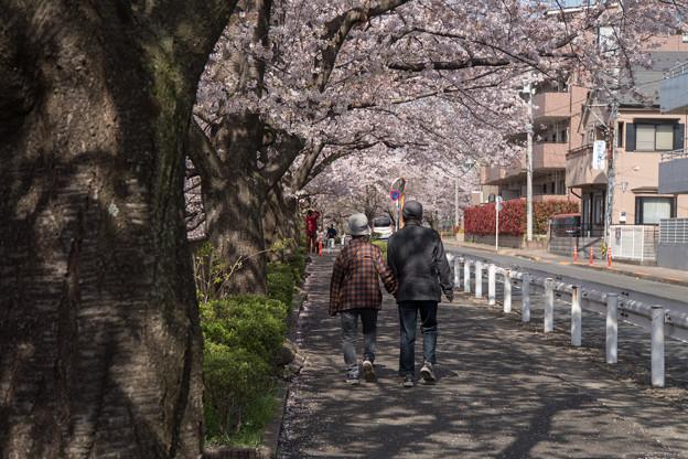 【恩田川の桜】2-3