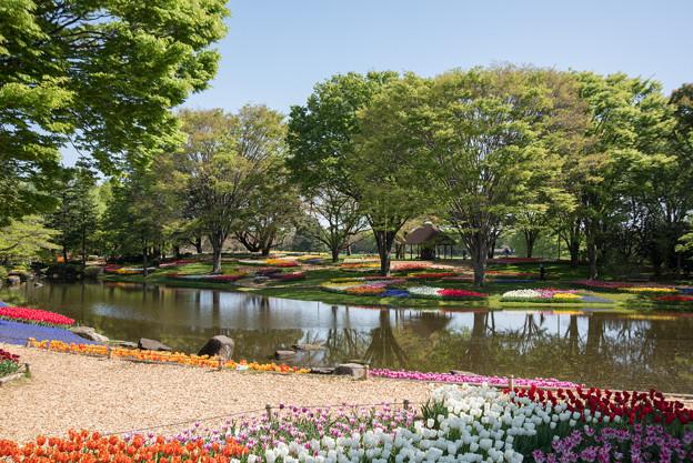 昭和記念公園【渓流広場の景色】1-1