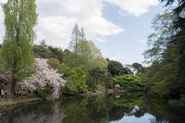 新宿御苑【下池の眺め】