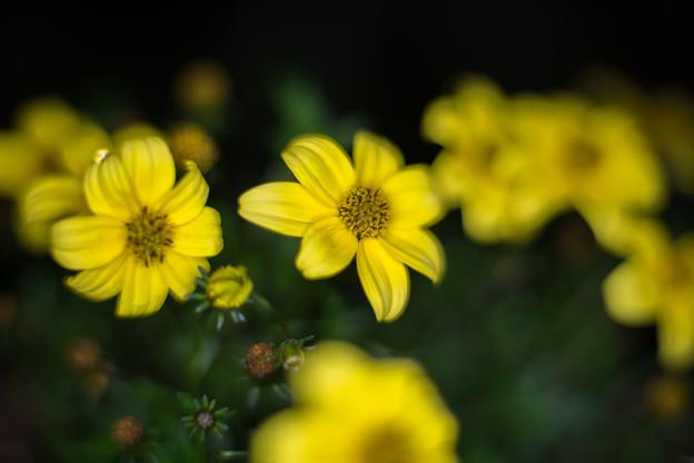 庭の花【ビーダンス】