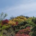 Photos: 東北お花見ツアー【花見山公園の山の様子】