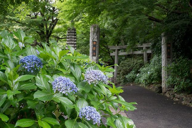 浄慶寺【山門と紫陽花】1