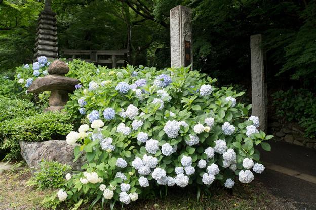 浄慶寺【山門と紫陽花】2
