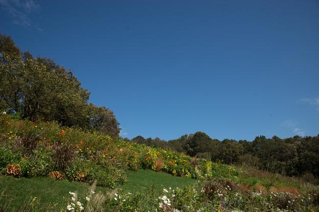 里山ガーデン【大花壇の様子】2