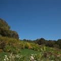 写真: 里山ガーデン【大花壇の様子】2