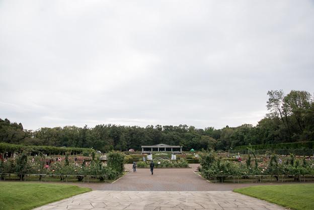 神代植物公園の眺め