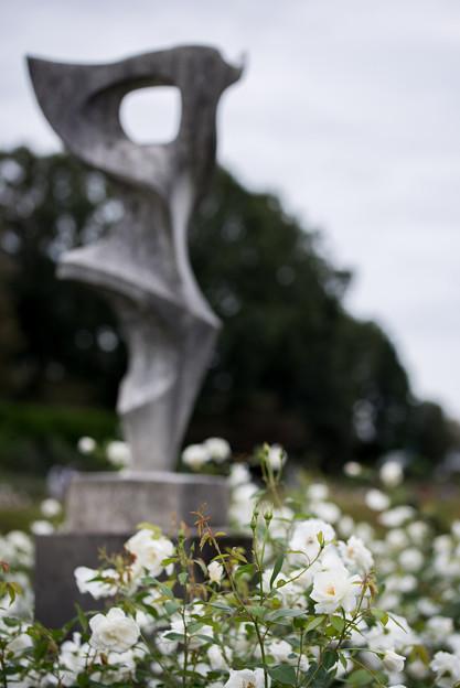 神代植物公園【バラ:アイスバーグ】2