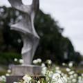写真: 神代植物公園【バラ:アイスバーグ】2