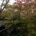 箱根美術館【庭園内の紅葉】1
