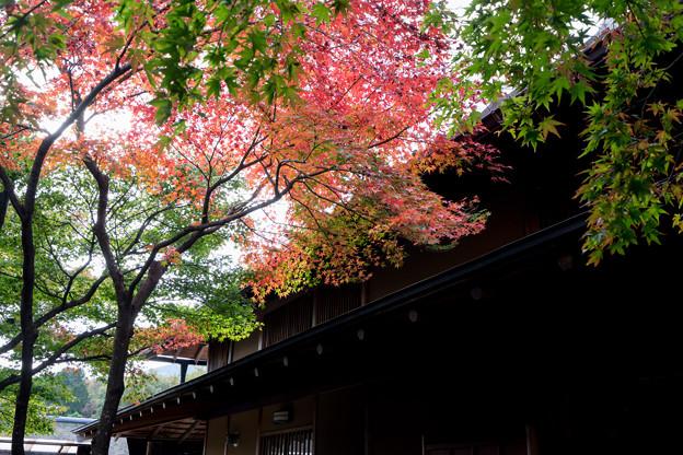 箱根美術館【富士見亭の紅葉】