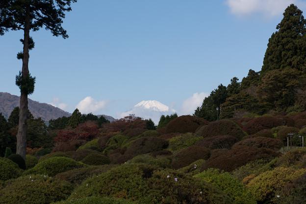 上のホテル【庭園から眺める富士山】