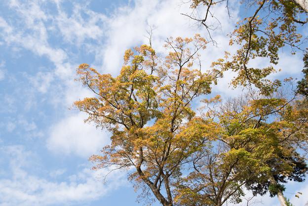上のホテル【青空に広がる黄葉】