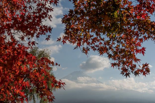 河口湖【富士山と紅葉】