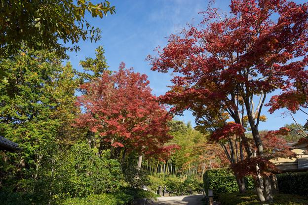 昭和記念公園【日本庭園:清池軒周辺の紅葉】1