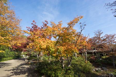 昭和記念公園【日本庭園:清池軒周辺の紅葉】2